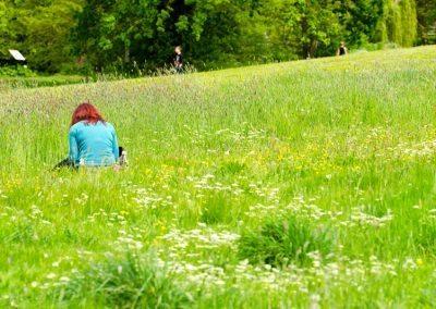 Meadow, Holywells Park. Photo: www.parrishcolmanphotography.co.uk