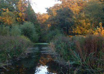 Pond in Autumn, Liz Harsant