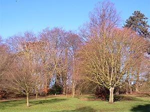 holywells-trees